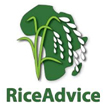 Rice Advice